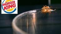 Der Ekel-Skandal bei Burger King veranlasste auch Georg Trakl dazu, einen kritischen Kommentar zu verfassen: Um die Burger taumelt das Fliegengeschmeiß, um die bleichen Pommes auf öliger Flut. Geh fort! Geh fort! Es modert so heiß! In der Friteuse knistert der Verwesung Glut! Die Belegschaft weint, der Kunde starrt, auf […]