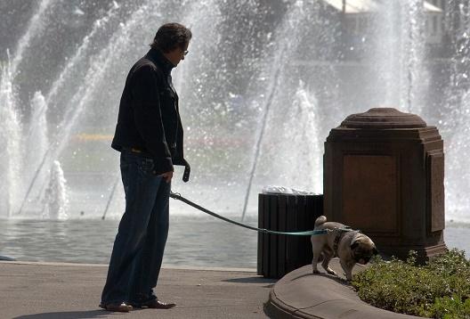 Achtung Hundehaufen