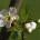 Unter großen Feierlichkeiten wurde am Sonntag auf dem Petersplatz in Rom der verstorbene Günther Kobilansky aus Paderborn zum Heiligen erhoben. Mehr als eine Million Besucher waren beim Spektakel dabei. Kobilansky, der über 30 Jahre lang auf der Straße lebte und bei seinen Freunden nur als Günni bekannt war, soll im […]